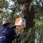 Jan-Eric bringt ein Eigenheim für Vögel an