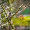 Titelbild: Der Frühling macht Pause
