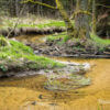 Titelbild: Impressionen aus der Dresdner Heide